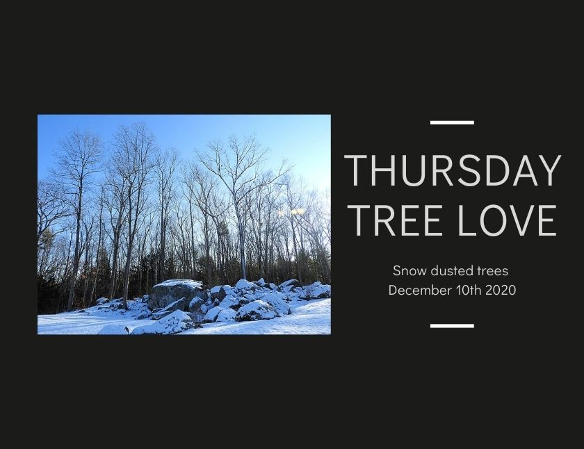 Snow dusted trees blog thumbnail