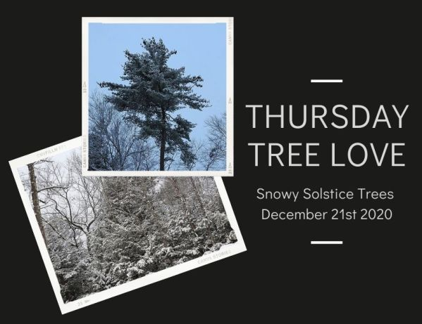 Snowy Solstice Trees blog thumbnail