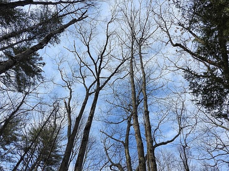 Wordless Wednesday Woods Walk