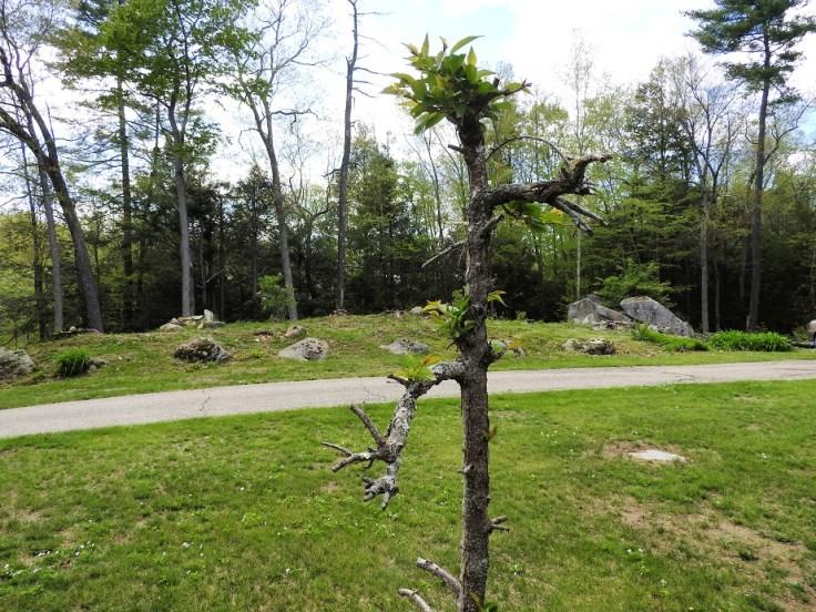 Update on our landlady's memorial tree for Thursday Tree Love