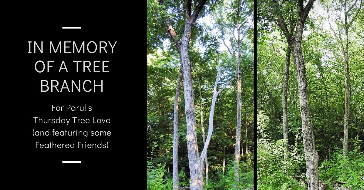 In memory of a tree branch with Feathered Friends Thursday Tree Love blog thumbnail