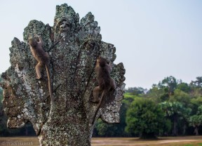 Monkeys at Angkor Wat