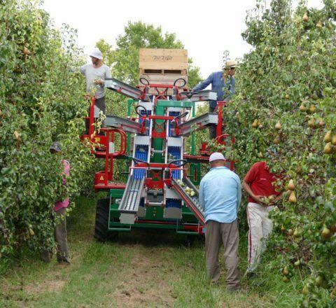 Maquinaria para la recolección de frutales. Plataforma múltiple. Fuente: argiles