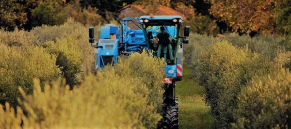 Cosechadora de Olivar superintensivo new Holland