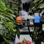 Robots en Invernadero: dónde, cómo y cuándo se utilizan
