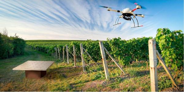 Dron en viñedo