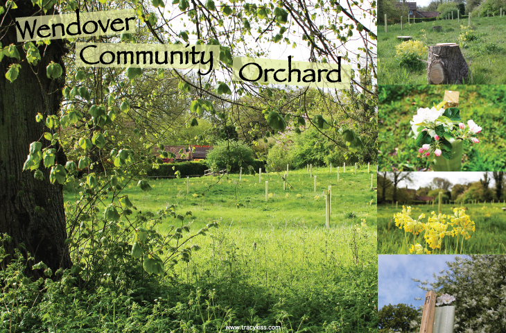 Wendover Community Orchard May 2015