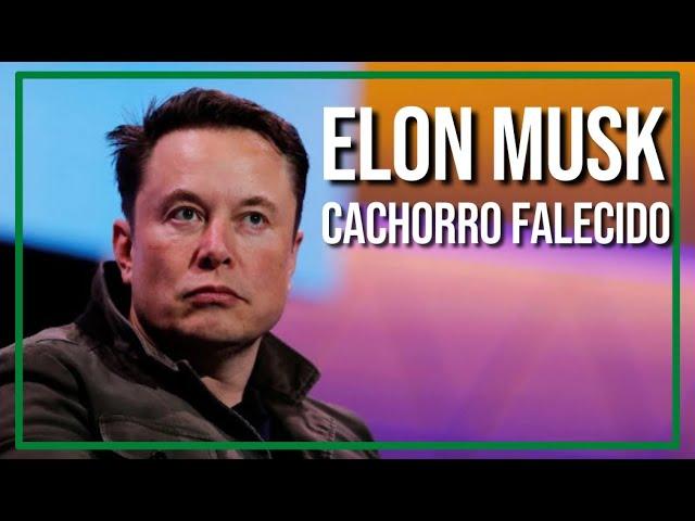 ELON MUSK É CACHORRO FALECIDO
