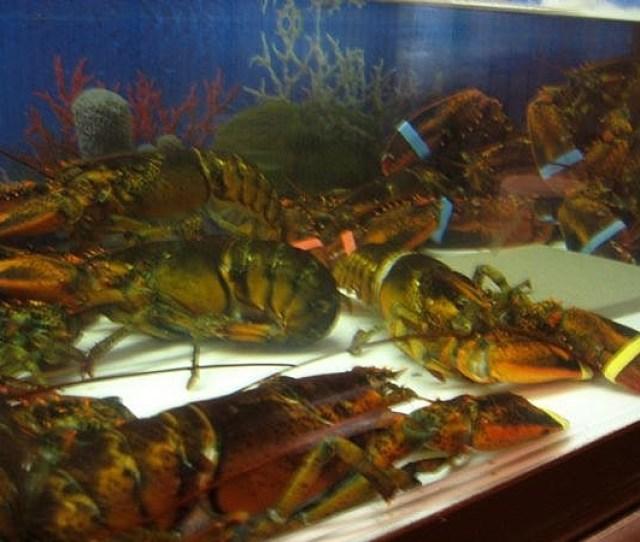 Lobster Tank1