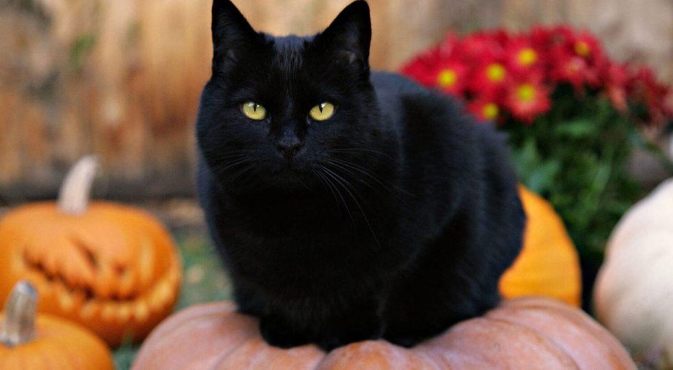 Ferește-te de pisica neagră.