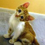 gatto-buffo-5