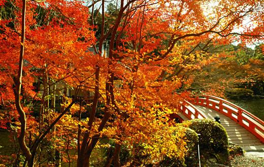 Foto tratta da daigoji.or.jp