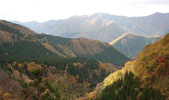 Shirakami Sanchi. Immagine tratta da japan-guide.com