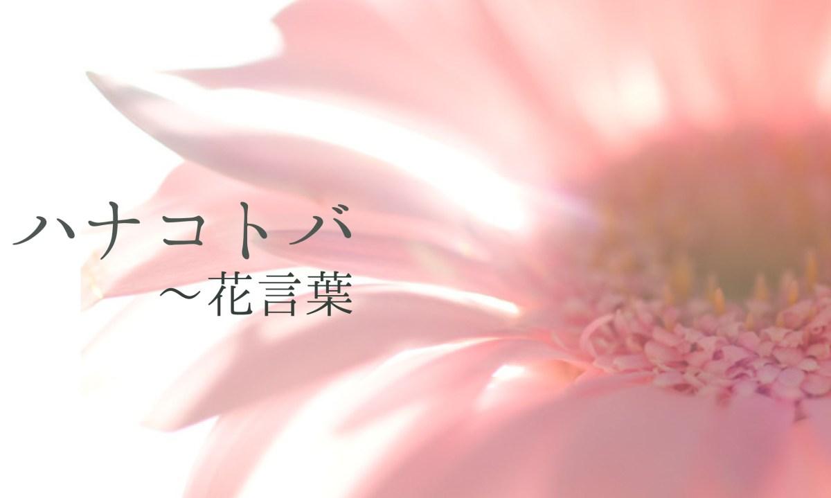 Hanakotoba  花言葉 - o dillo con un fiore
