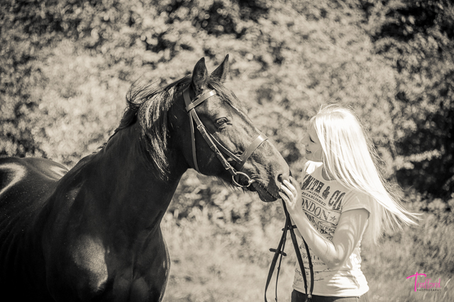 Equine portraits by Trafford Photography