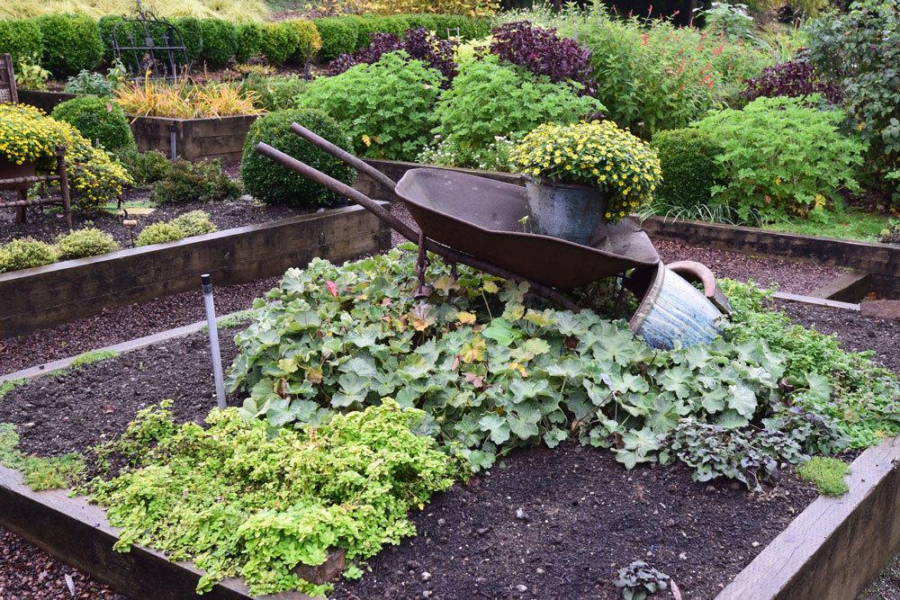Herbs in the Garden