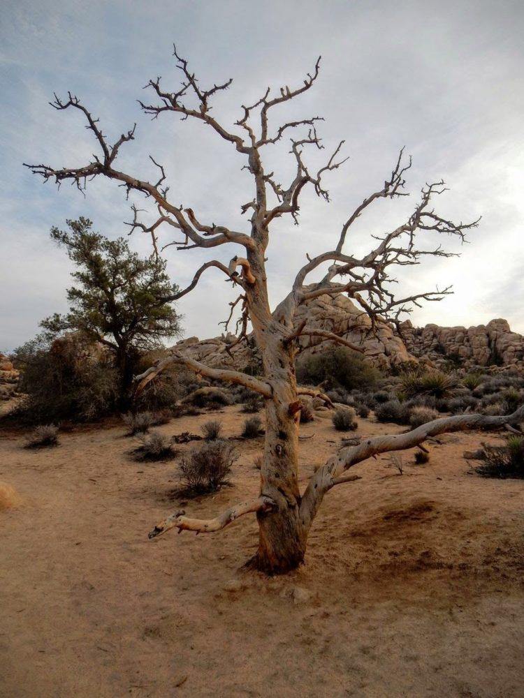 Tree of Woah