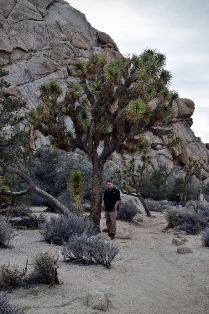 100+ Year Old Joshua Tree
