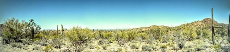 Saguaro NPS West