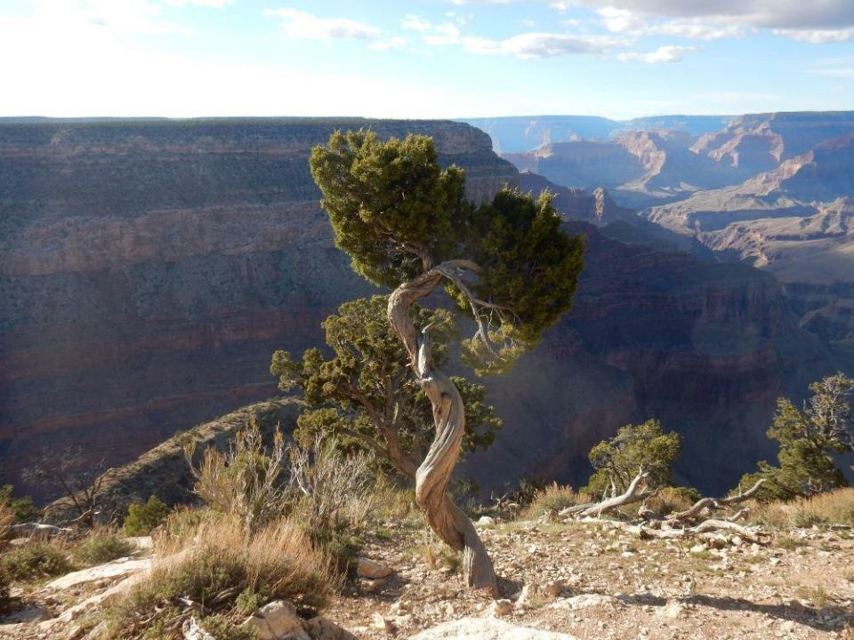 Can't go wrong with pictures of the grand canyon.