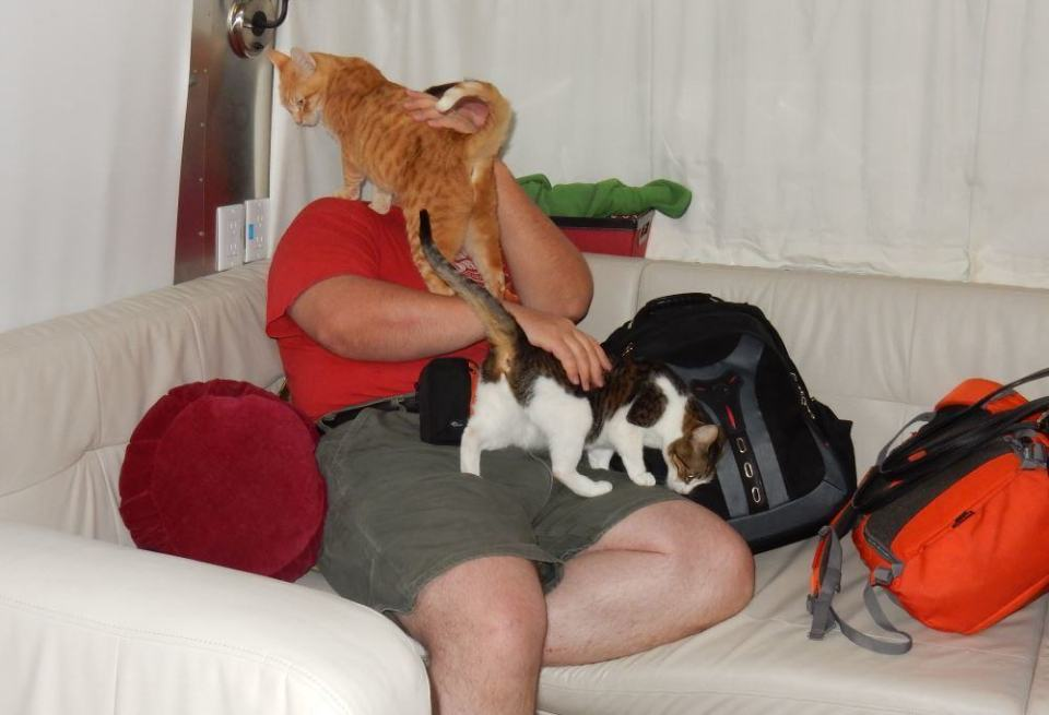 A typical scene of me just getting back from a day trip. Kitties need pets.