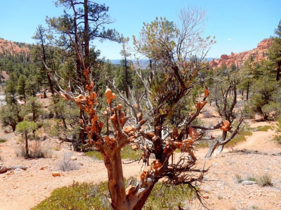 Rare Rock Tree