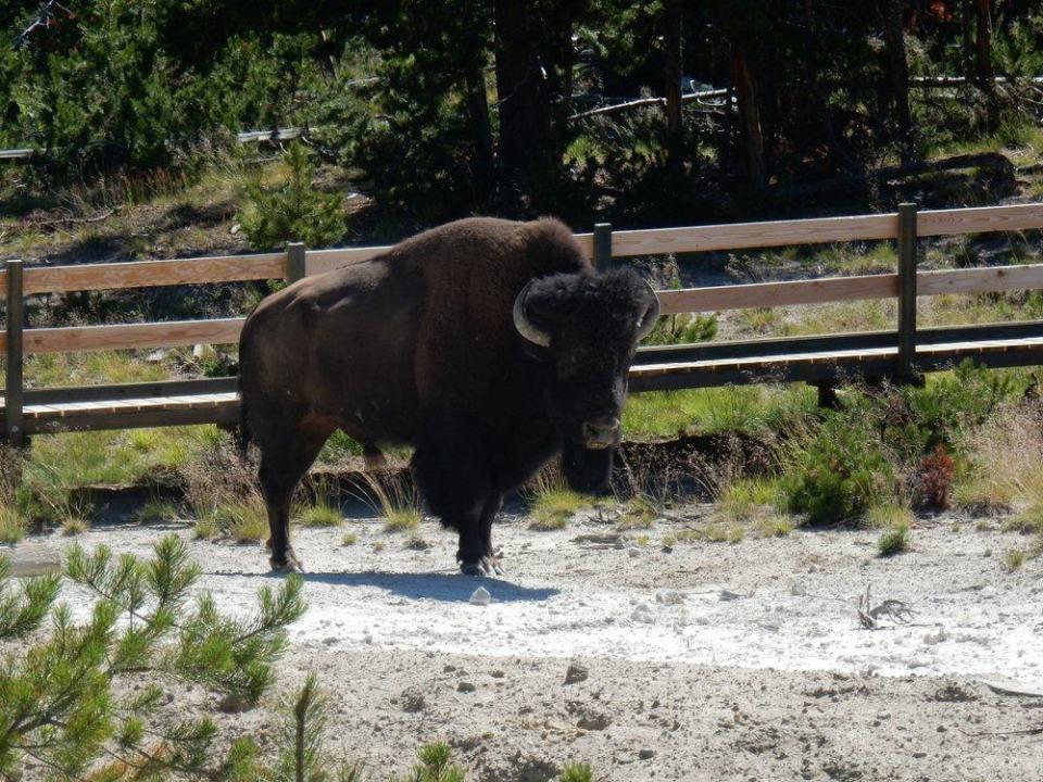 Bison Crossing Boardwalk