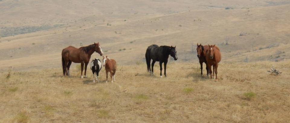 A group of horses we passed on private land between battlefield sites.