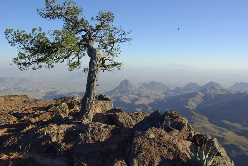 Big Bend National Park Chisos Basin The Adventures Of