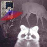 QARYYQ Wildlife Trail Camera Color Letter Trail Camera Infrared Night Vision Wildlife Reconnaissance Camera Hunting Camera Wild Animal Camera