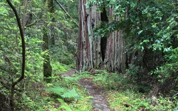 Saturday, January 21, 2017 (Cancelled) - Portola Redwoods State Park
