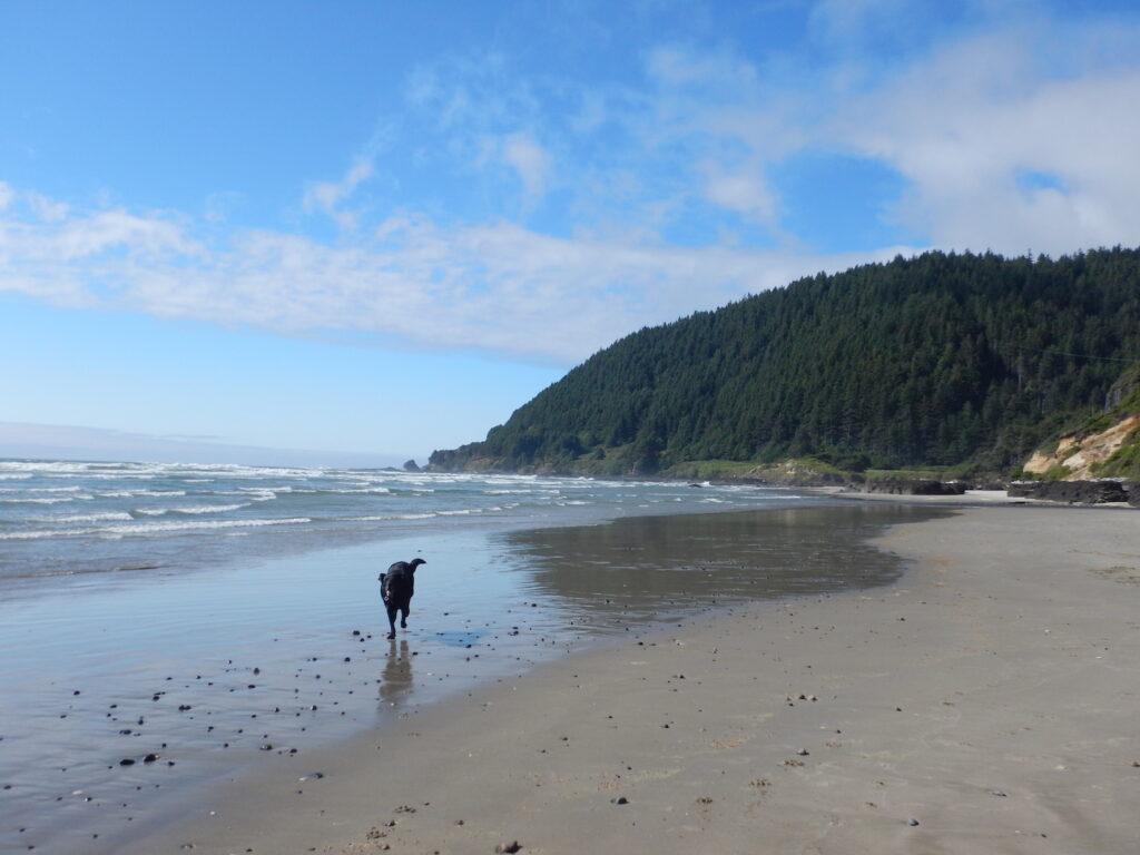 Jake LOVED Neptune Beach!
