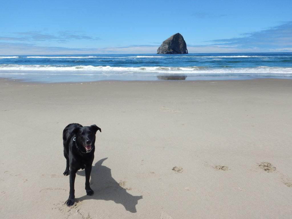 Cape Kiwanda north of Pacific City. You can drive onto the beach here!