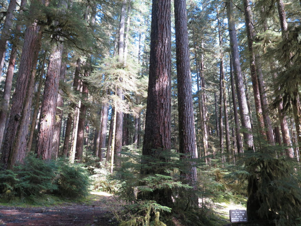 The beautiful forested hike to Sol Duc Falls