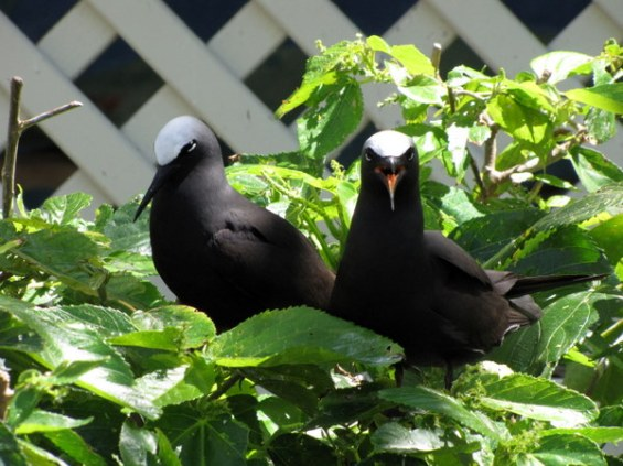 Seabirds everywhere! It's nesting season so they're a little testy.