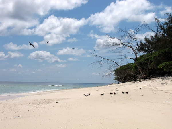 White sand and lots of birds