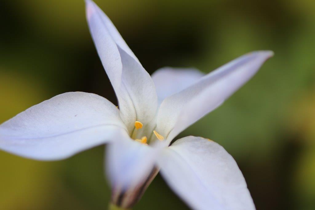 春の花, 春, 花, フラワー, カラー, 彩り, 彩色, spring, spring has come, flower, color,