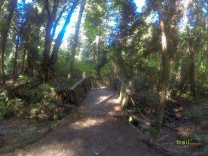 Trail im Stanley Park