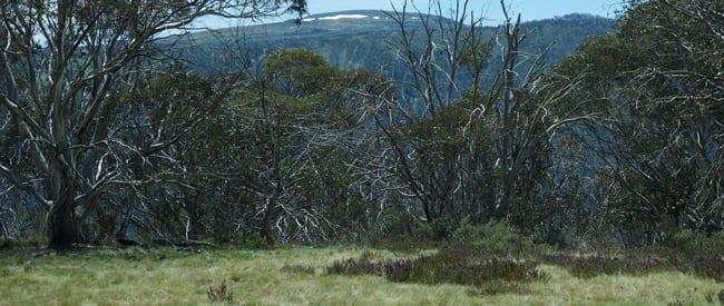 The-Cobungra-Ditch