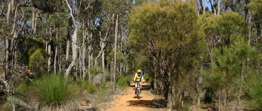 Jarrahdale Balmoral Trail