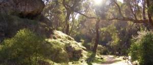 Woodlands Walk Trail Hiking Australia