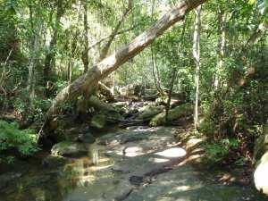 Bobbin Head Rainforest walk
