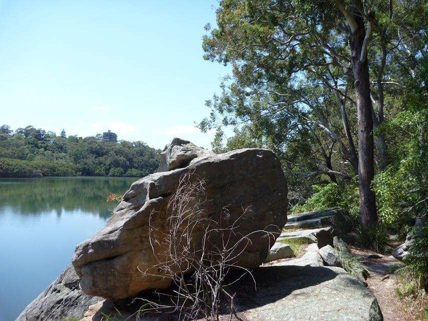 Boronia Park to North Ryde