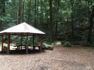 Carrington Park to Leura Forest return
