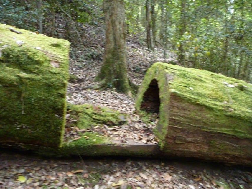Cedar Brush to Basin Campsite