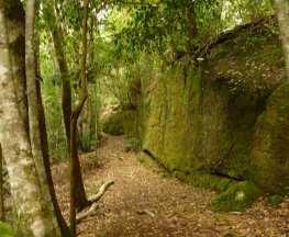 Moss Wall Walk