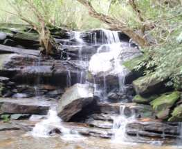 Somersby & Mooney Mooney Creek Loop