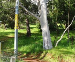 Burnside Walks - A