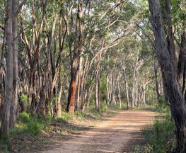 Horsnell Gully and Giles Conservation Park