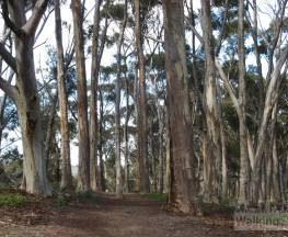 Yurrebilla Trail - Section 1: Belair National Park to Eagle on the Hill